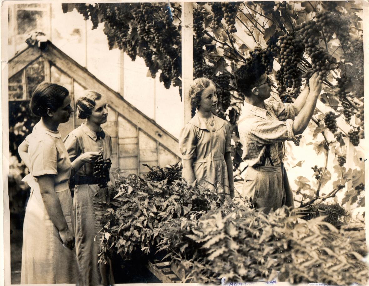 HVIN00001 Kippen Vine 1933