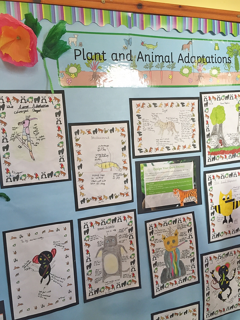 P5-6 Animal Adaptations